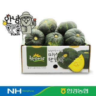 [한경농협] 제주 미니미니 밤호박(단호박) 3kg (개당 200~300g)
