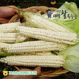 괴산농협 대학찰옥수수 20개(특/18cm내외)