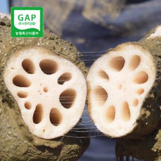 GAP인증 연고농장 연근 우엉 수확 2kg