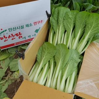 [안산팜] 아삭아삭 맛있는 얼갈이배추 2kg
