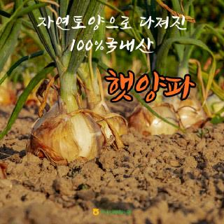 [익산원예농협] 2021년 햇양파! (특), 3kg