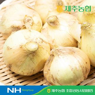 [제주농협] 햇살바람 조생양파4kg