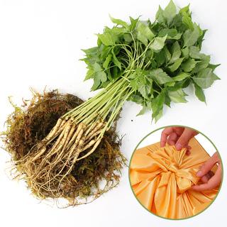 영동 건강한 새싹삼(중)50뿌리 선물세트