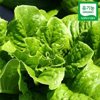 용천 유기농 로메인 상추 600g,800g,1kg