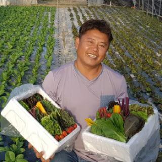 농부의 꿈 양주 클로렐라 국산 모듬 쌈채소1.25kg