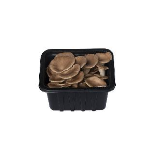 농협하나로마트 고기느타리버섯 150g/팩