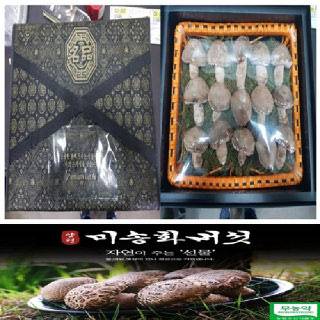 미송화버섯 최고급포장 1kg 무농약 산지직송 명절선물세트