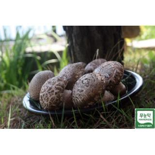 미송화버섯 (주)미송 중품형1kg  산지직송 무농약