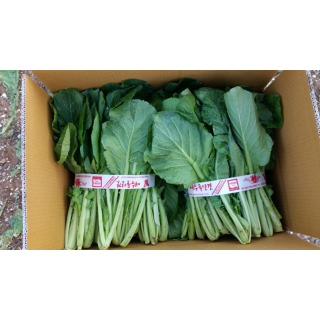 여수원예농협 돌산 갓 10kg