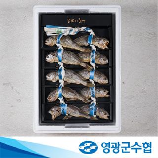 영광군수협 법성포 영광 보리 굴비 2호(490g내외/10미)