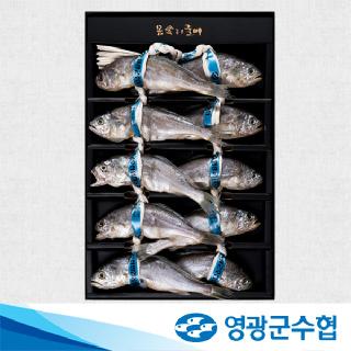 영광군수협 법성포 영광 오가 굴비 특선 1호(1kg/10미)