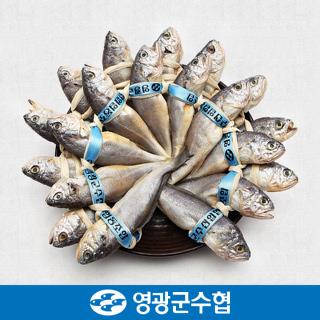 영광군수협 법성포 영광 굴비 세트 1.6kg(역걸이/20미) / 선물세트 포장 선택