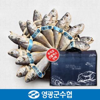 영광군수협 법성포 영광 굴비 세트 1.5kg(역걸이/20미) / 선물세트 포장 선택