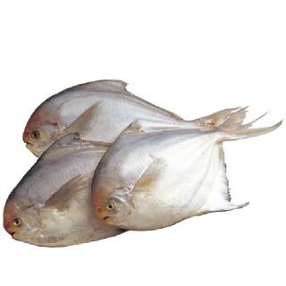 국내산 자연산 병어(소) 500g(5-7미)