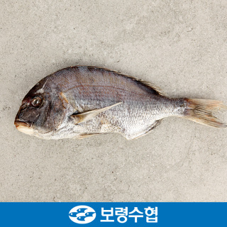 보령수협 국내산 반건조 참돔 2미 1kg(500g*2팩)