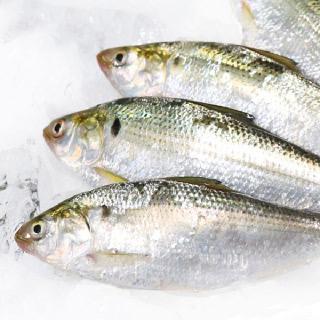 착한어부 삼천포 앞바다 자연산 급냉 전어 1kg(15-20미/구이용)