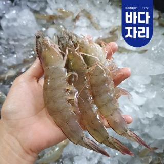국내산 제철 회로먹는 신안 LIVE 생새우 1kg (28~32미)