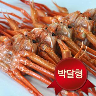 [영덕강구항] 박달홍게 중 5 마리(수율80~90%)