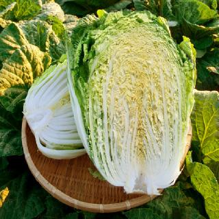 순천농협남도식품 절임배추 20kg(11월13일부터 출고예정)