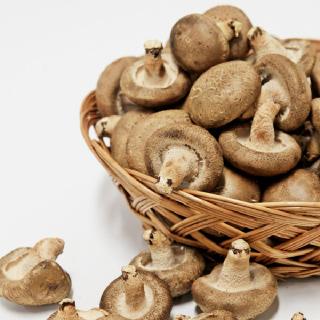친환경 생표고버섯 1kg(2kg) 중 선택
