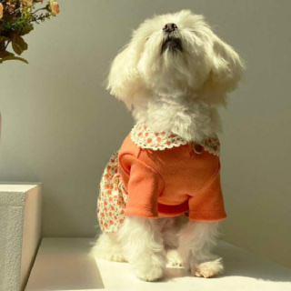 (현대Hmall)S-XL설렘 강아지원피스 2color 크리미스튜디오 봄 여름 명품강아지옷