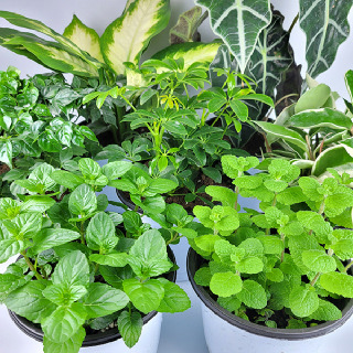 키우기 쉬운 공기정화식물 중품 모음전