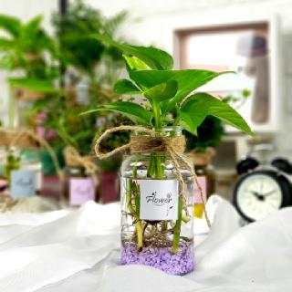 초딩도 키우기 쉬운 수경재배식물 19종