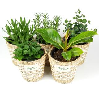 실내공기정화식물 27종 농장직영 키우기쉬운식물