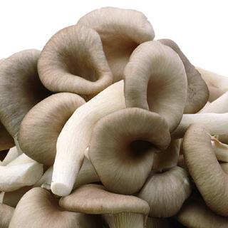 느타리버섯(골라담기), 100g(300g단위로 판매)